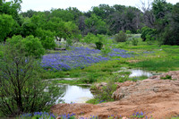 Bluebonnets On Creek