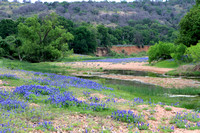 Bluebonnets & Stream